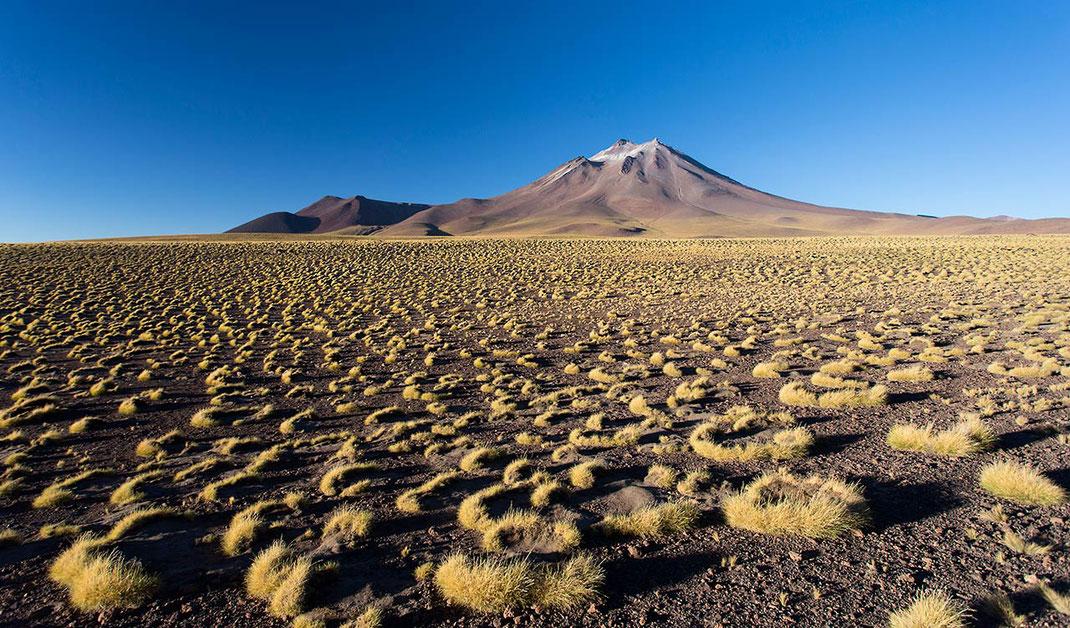 Yellow desert grass and blue sky in the Atacama Desert, San Pedro de Atacama, Chile 1280x751px