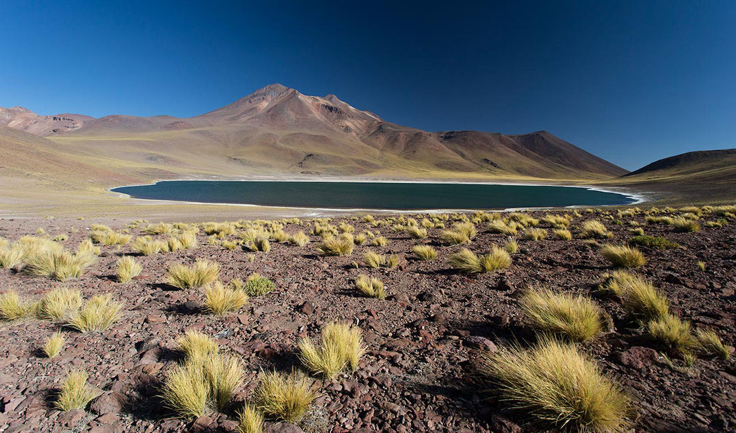 Beautiful blue laguna miscanti with yellow desert gras and blue clear sky, Atacama desert in the andes, Chile 1820x754px