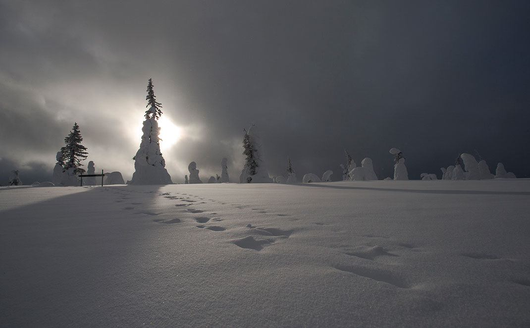 Tree silhouettes and steps in the deep snow, Riisitunturin National Park, Posio, Lapland, Finland, Scandinavia