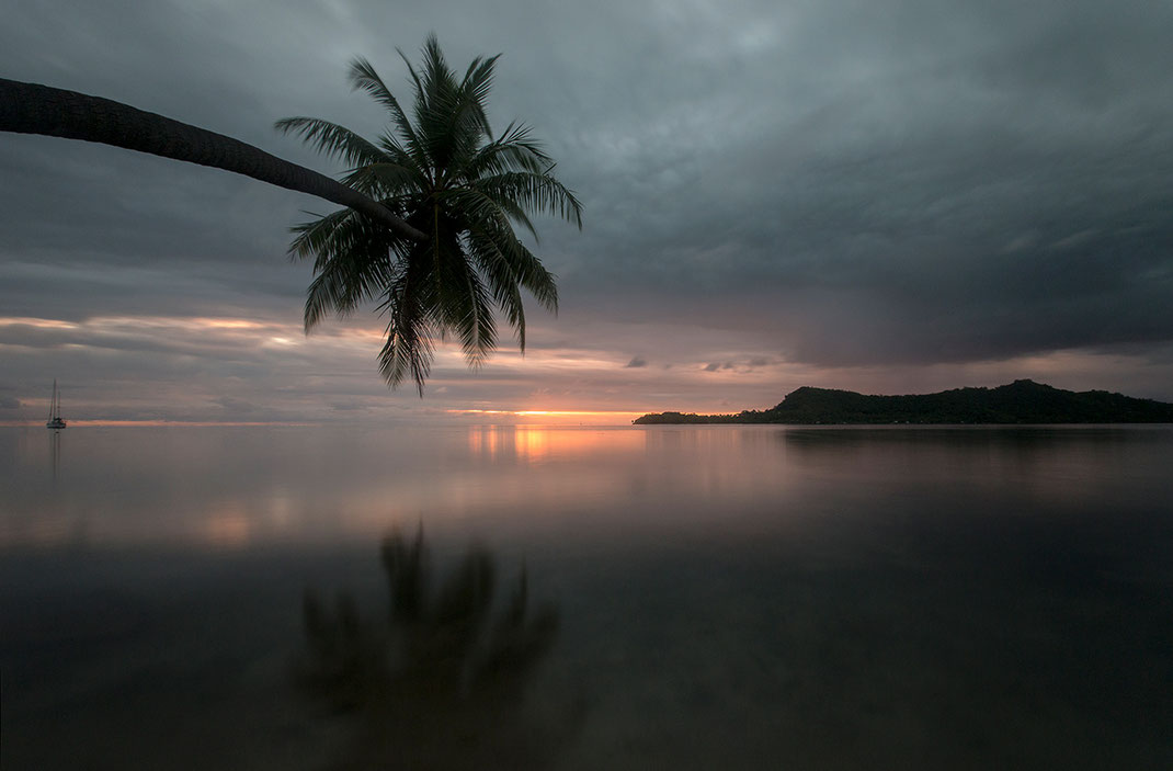 Beautiful Island and bending palm tree, long exposure, Bora Bora, South Pacific, French Polynesia, 1280x841px