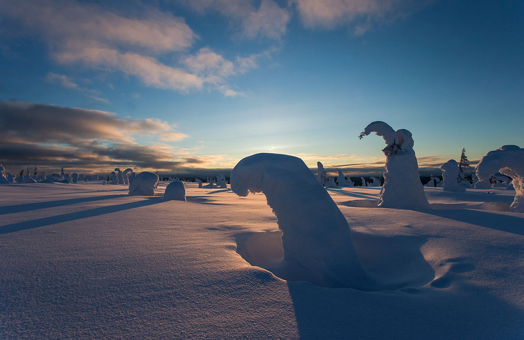 Last warm rays of light, frozen trees in the Riisitunturin National Park, Lapland, Posio at sunset