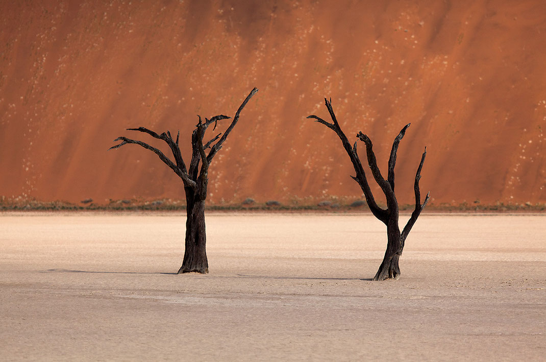 Two dead tres in Dead Vlei, Sossusvlei, Namib Desert surrounded by illuminated orange sand dunes, Namib Naukluft Park, Namibia, 1280x848px