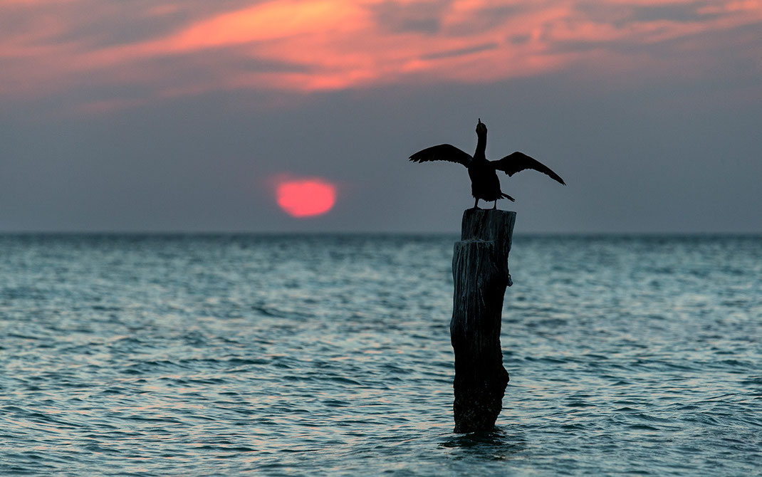 Comorant drying its feathers during the sunset in the Gulf of Mexico, Island Holbox, Yucatan Peninsula, Mexico, 1280x801px