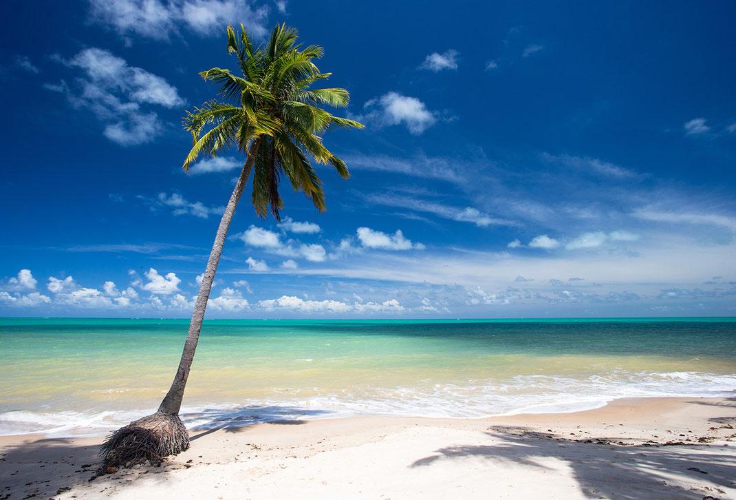 Palm tree on beautiful white beach with turquoise water, Praia do Carro Quebrado, Broken Car Beach, Maceio, Brazil, 1280x869px
