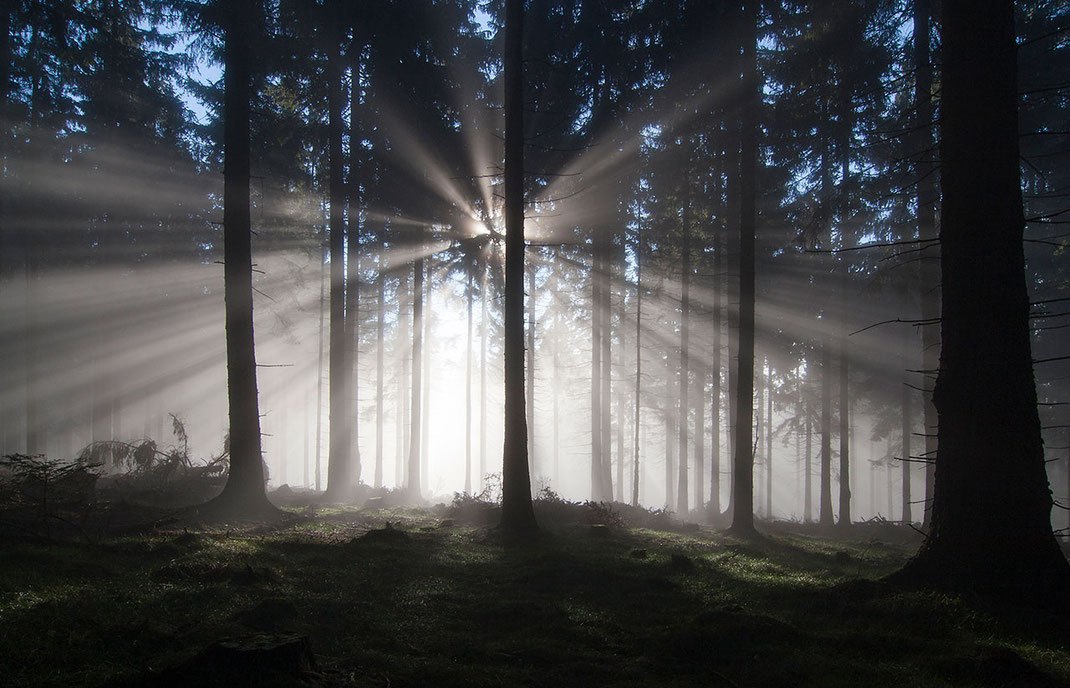 Light rays breaking through the fog in a forest, Taunus mountains, Hessen, Germany, Europe