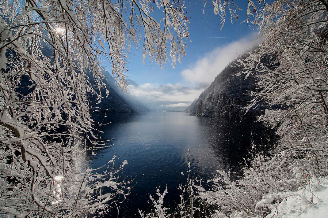 View from the Malerwinkel through snowy trees with fresh snow at beautiful Koenigssee, Alpes, Bavaria, Germany