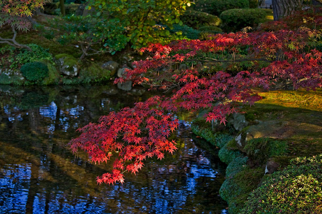 Autumn colors in a Japanese Garden, Kenrokuen Garden, Red leaves, Kanazawa, Japan, Asia, 1280x821px