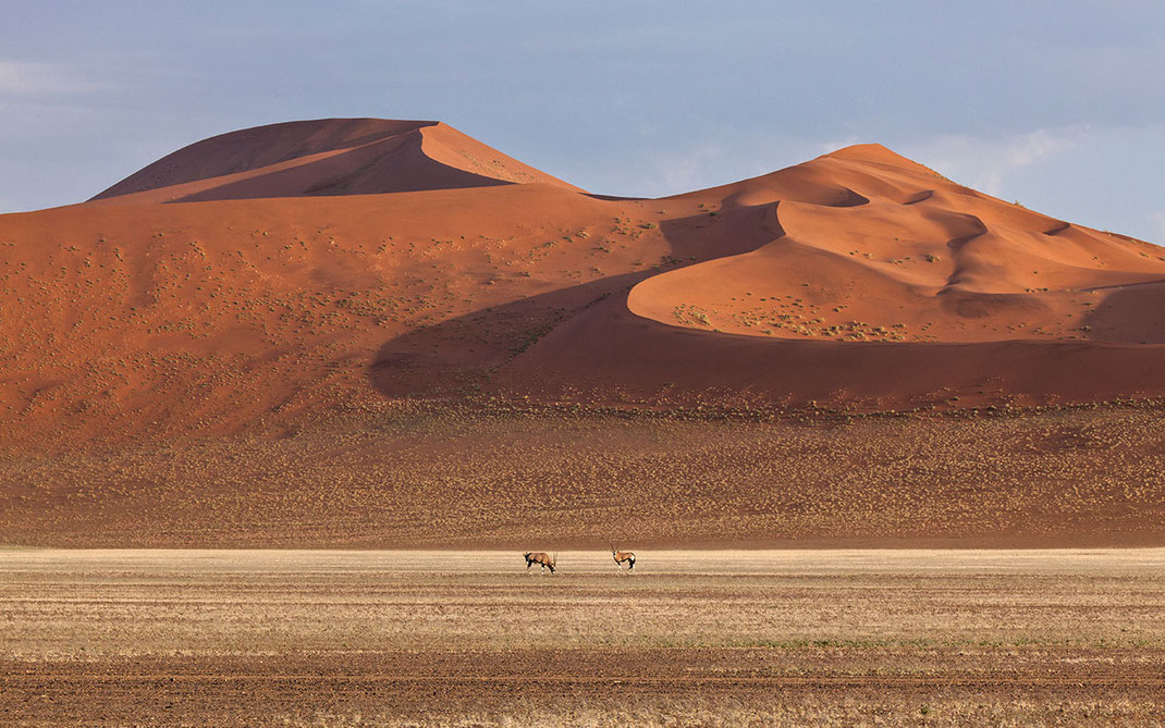 Oryx and Red Sand Dunes in the Desert, Namib Naukluft National Park, Namibia, Africa, 1280x800px