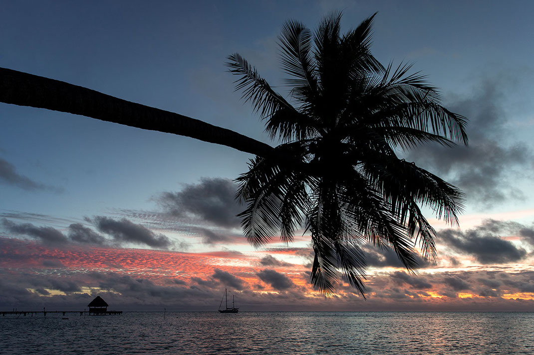 Beautiful sunset with palm tree, sailing boat and red clouds, Bora Bora, South Pacific, French Polynesia, 1280x853px