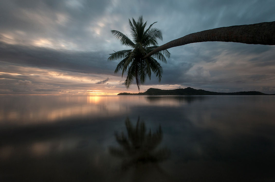 Long Exposure, palm tree bending and reflecting in the water, Bora Bora, Island, South Pacific, French Polynesia, 1280x848px