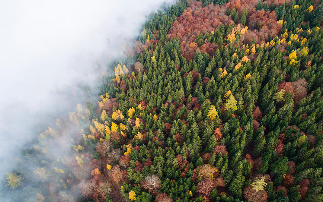 Blackforest Autumn colors Leaves and fog, Dji Phantom, Drone, Germany, 1280x802px