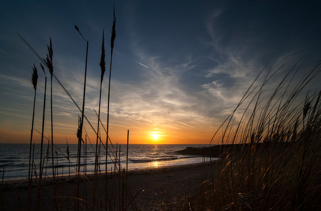 Beautiful sunset with warm colors between plants at a beach on Texel, Holland, Netherlands, 1280x843px