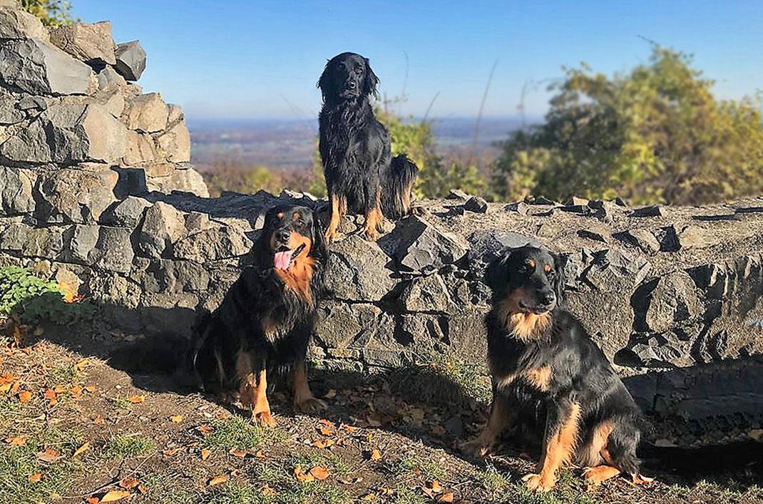 Baki vom Silberdistelwald, Brooke vom Nattbach & Annabelle vom Silberdistelwald