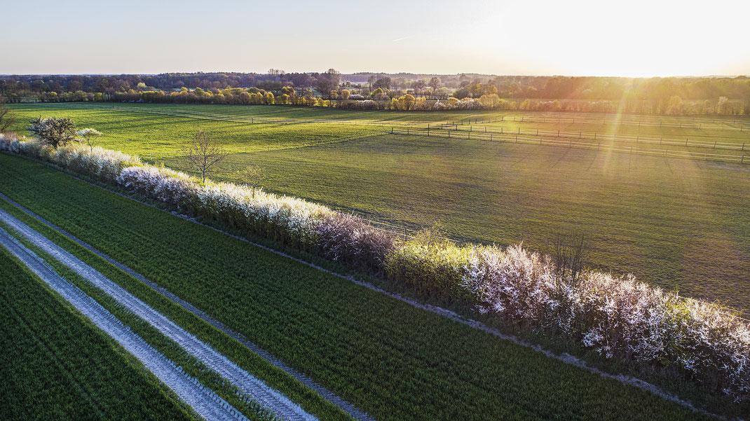Luftaufnahme von blühendem Knick im Raureif, zwischen Jersbek und Bargfeld-Stegen, Stormarn, von Jürgen Müller