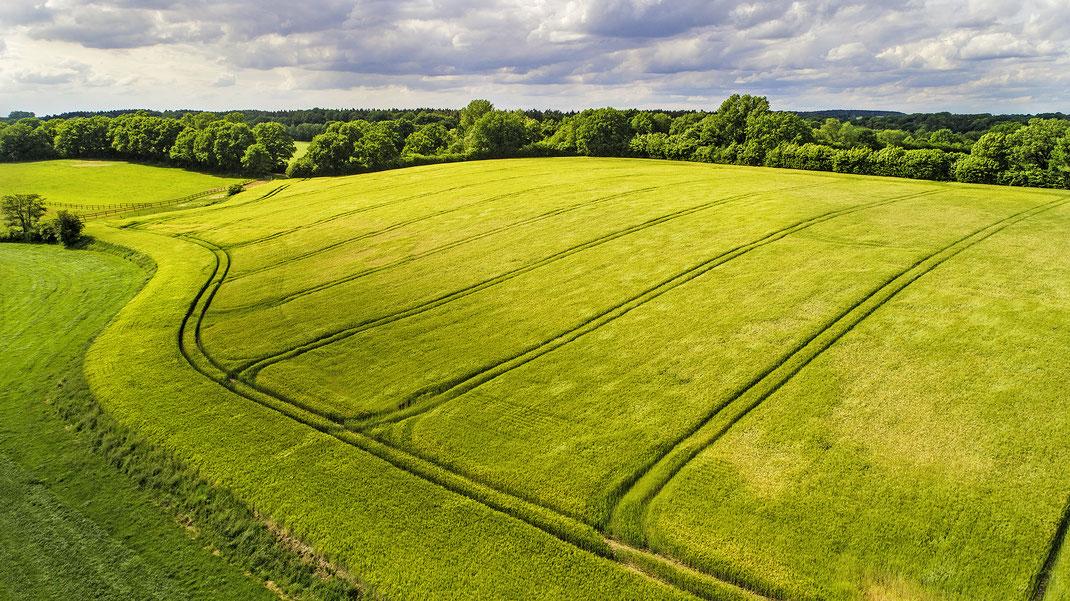 Luftaufnahme von Gerstenfeld mit Traktorspuren bei Neritz, Stormarn, von Jürgen Müller