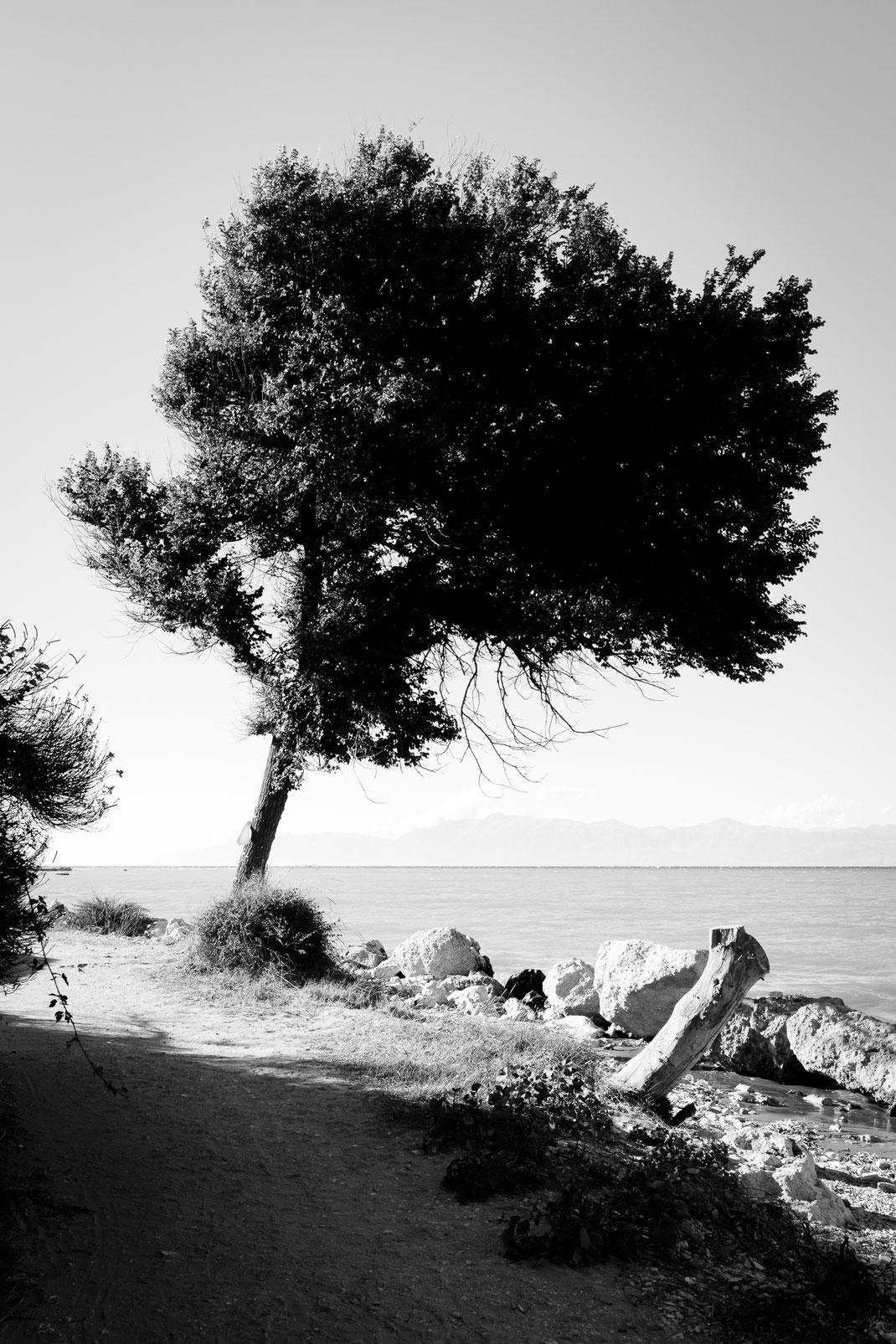 Korfu, Roda