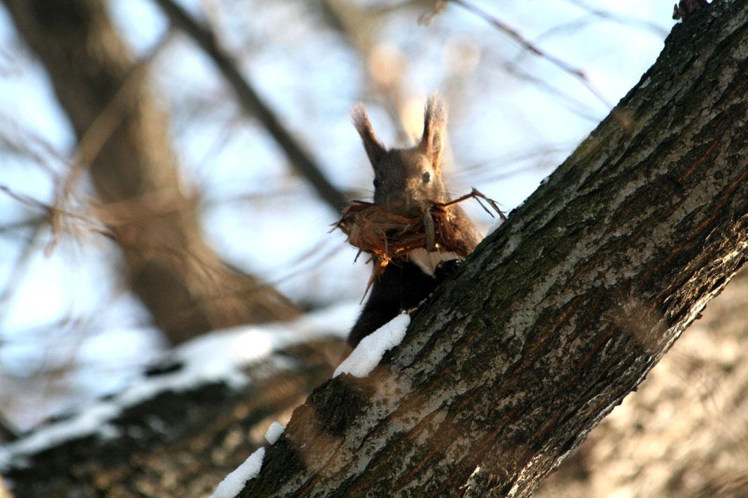 personalblog fotografie Eichhörnchen