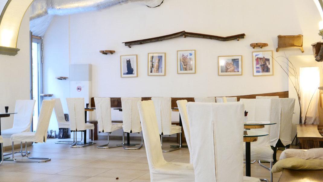 Café Neko Wien