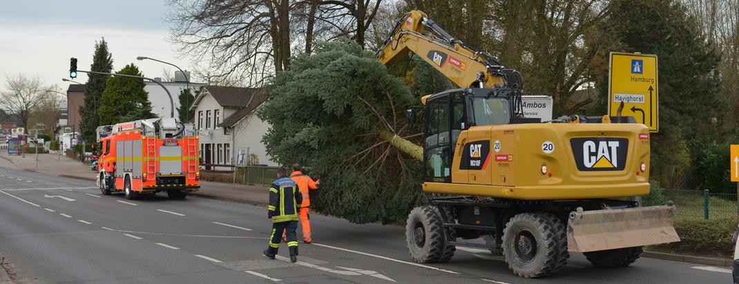 22.11.2016 - Weihnachtsbaum in Oststeinbek aufgestellt.