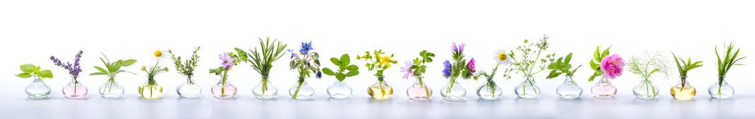 Darmsanierung  | Bioresonanz  | Akupunktur |  Naturheilkunde für Frauen | Bowentherapie / Faszientherapie  |  Immunsystem