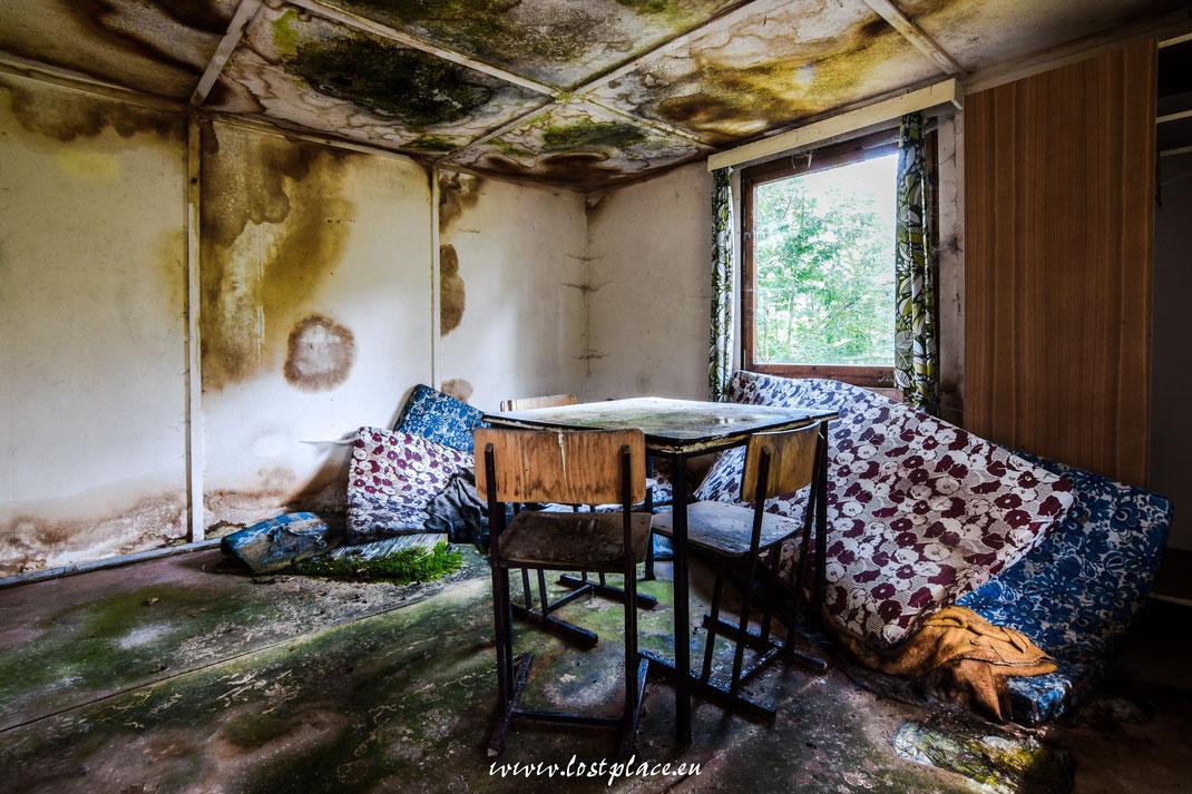 Moss auf dem Boden und Schimmel an der Wand