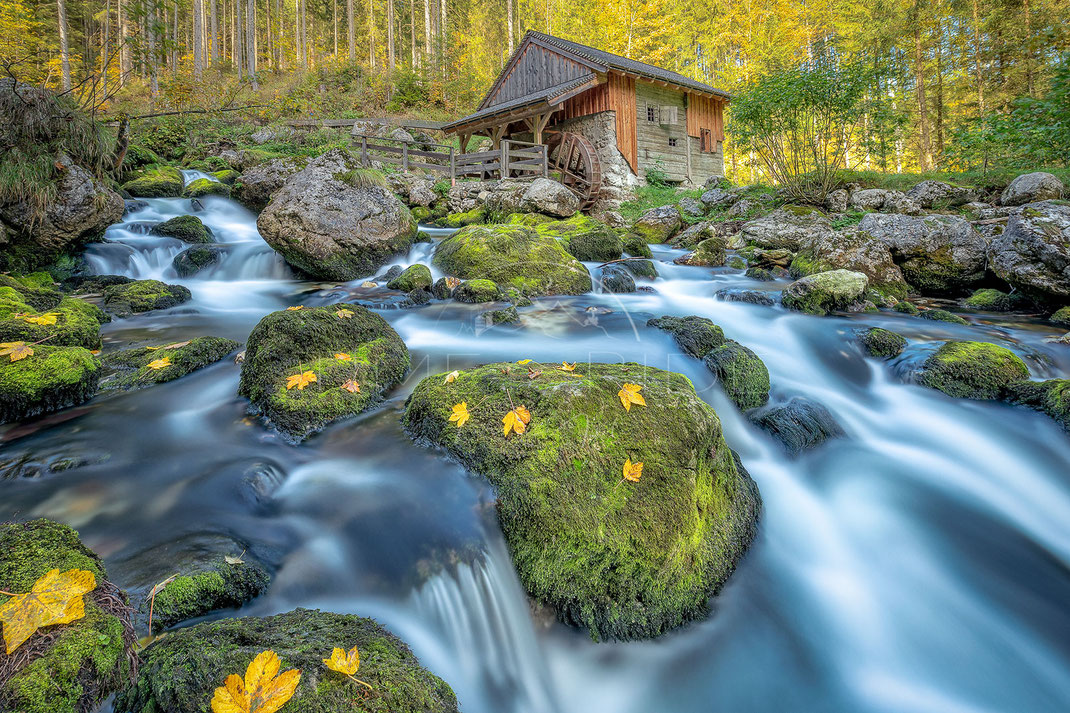 The River and the Gold | Der Fluss und sein Gold | Austria | Beautiful autumn afternoon with yellow leaves and bright green moss at a little mill | Landschafts- & Naturfotografie | Landscape & Nature Photography