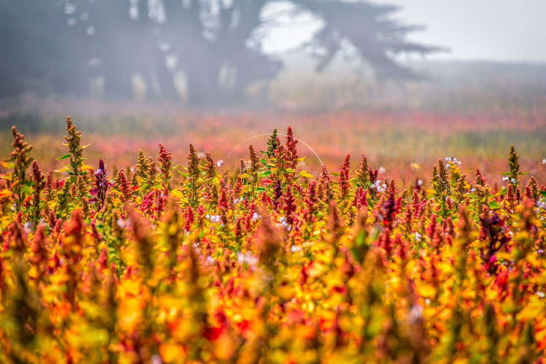 Field of Colours | Das Feld der Farben | Oregon | USA | Million of different colours flowering | Landschafts- & Naturfotografie | Landscape & Nature Photography