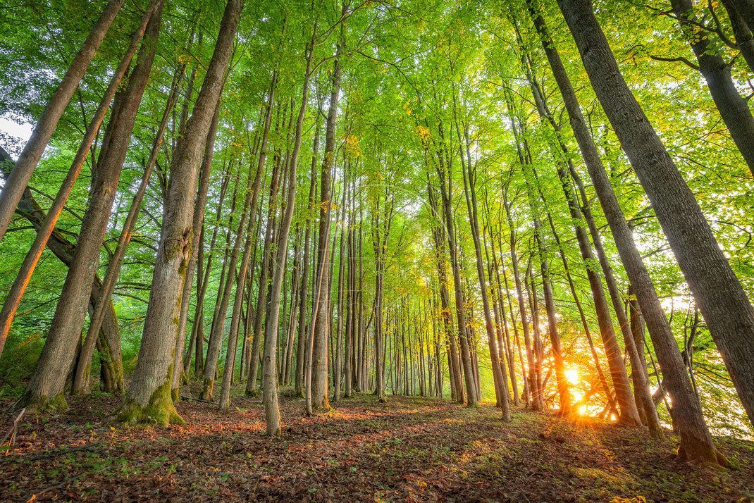 Untouched | Unberührt | Bohemian Forest | Czech Republic | Last light at the lake lipno within deep green trees | Landschafts- & Naturfotografie | Landscape & Nature Photography