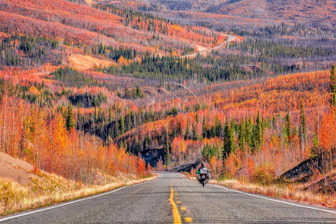 Indian Summer | Altweibersommer | Alaska | USA | Motorrad-Abenteuer-Fotografie | Motorcycle ADV Photography | Poster & Leinwände