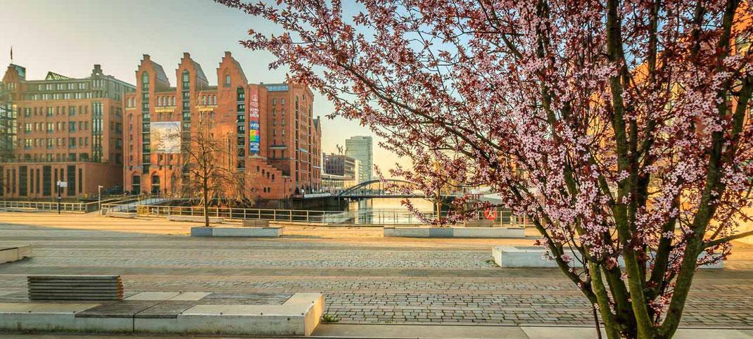 Martimes Museum Hamburg mit Blüten im Vordergrund