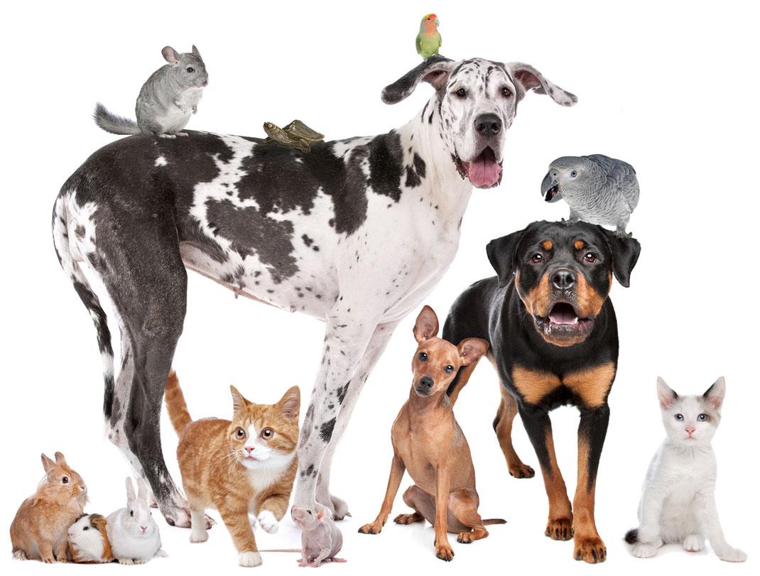 Bildcollage mit Hunden, Katzen, Papageien, Kaninchen, Mäuse und Hamstern.