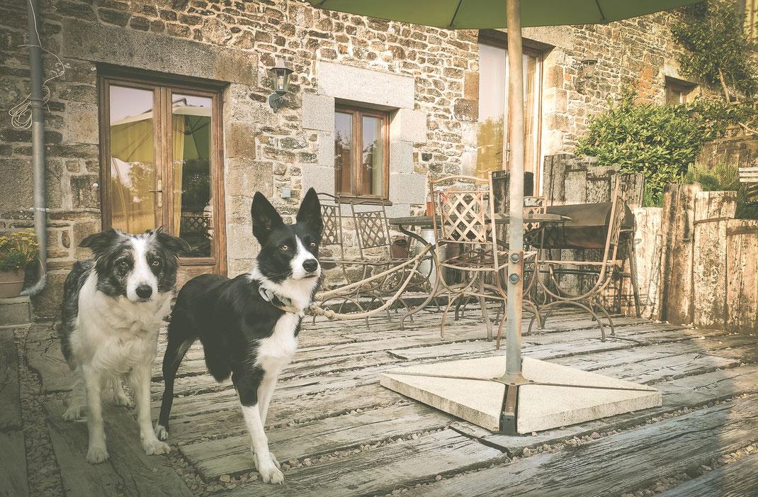 Zwei Border Collies vor einem normannischen Steinhaus in Lénault.