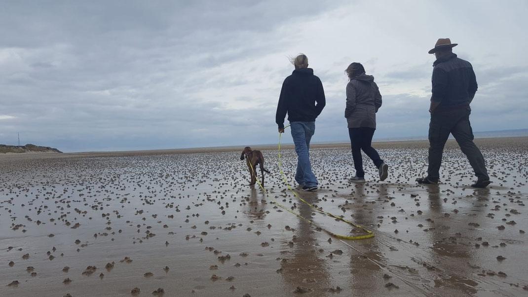 Drei Menschen und ein Hund am Strand von Hatainville in der Normandie.