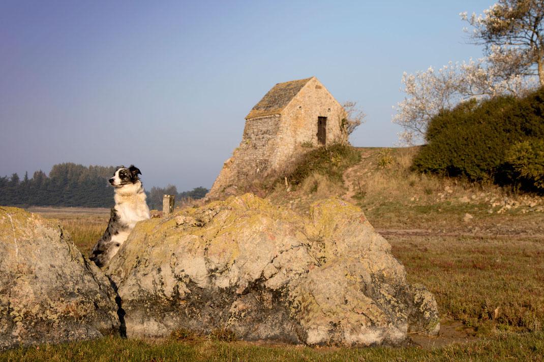 Urlaub mit Hund in der Normandie
