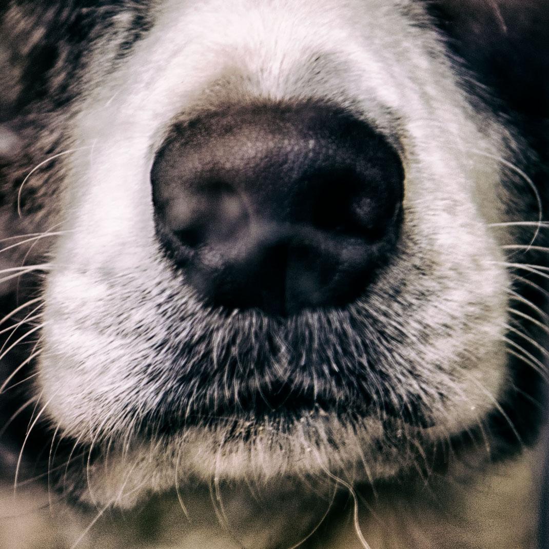 Eine traurige Hundeschnauze: Nicht immer ist der Hundealltag in der Normandie rosig!