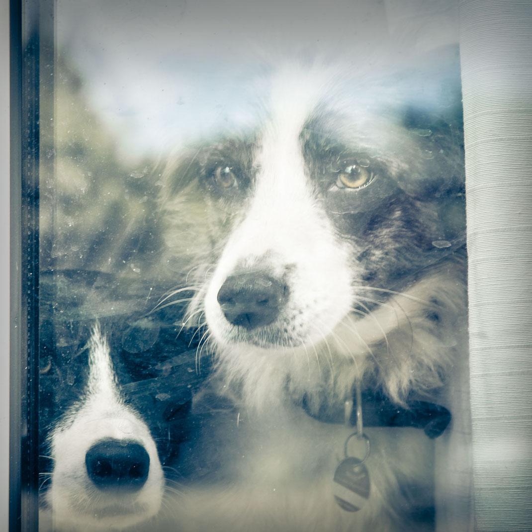 Ben und Idgie – absolut unterschiedlich, aber wahre Hunde für die Seele