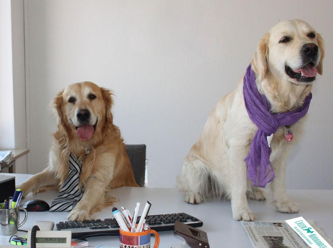 Zwei Hunde im Büro
