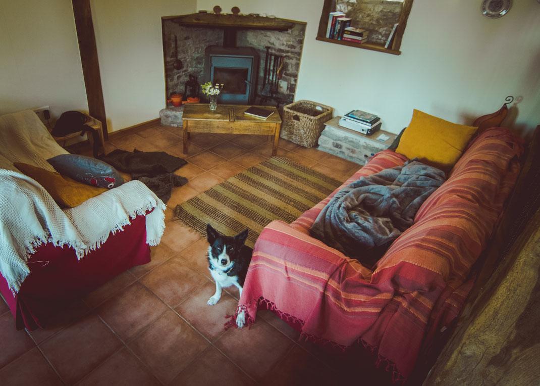 Ein Border Collie sitzt zwischen zwei Sofas im Eco-Gîte de Lénault.