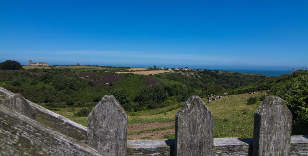 Auf dem Cotentin, ganz im Norden bei La Hague: Kühe auf der Weide, im Hintergrund das Meer.