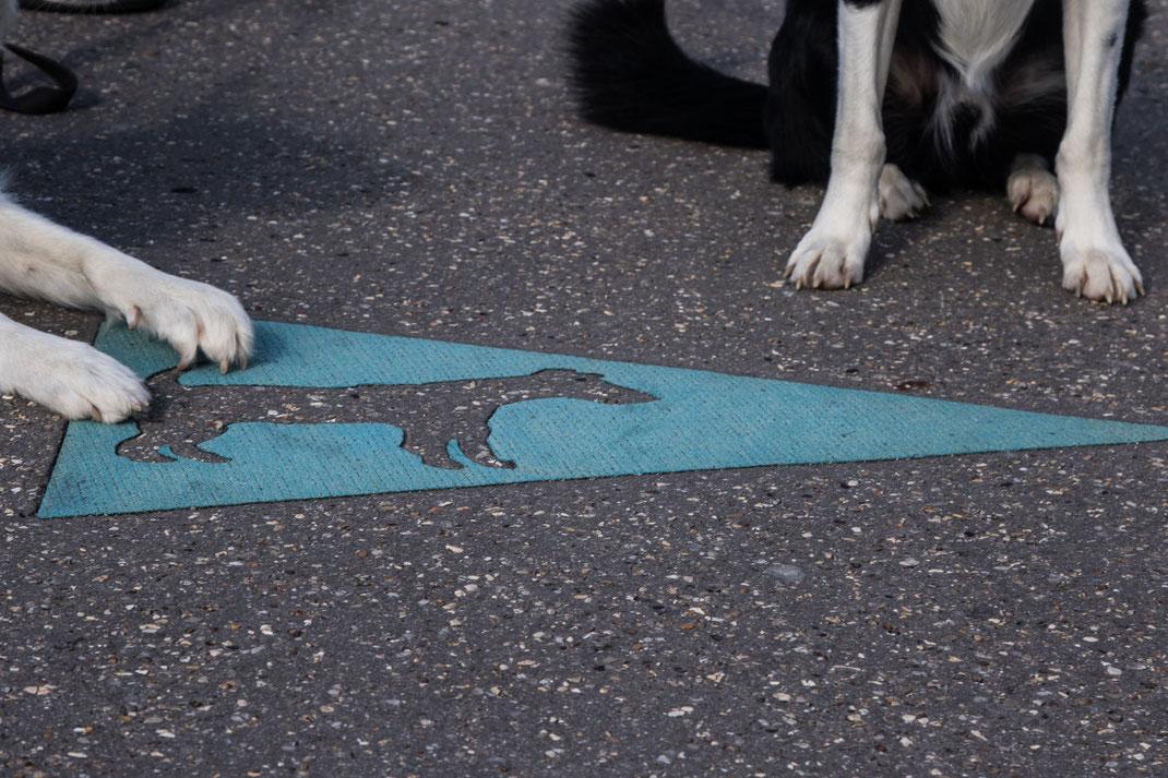 Ein Hundehinweisschild auf dem Boden, die Tatzen von zwei Border Collies dazu.