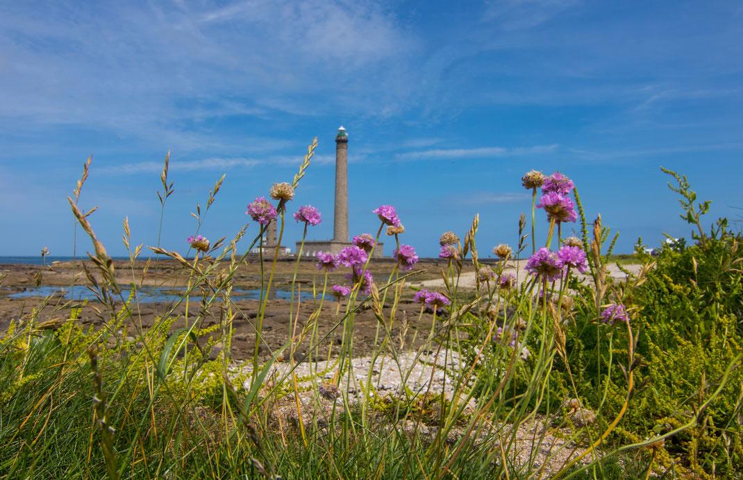 Der Leuchtturm von Gatteville Le Phare in der Normandie mit rosa Blumen im Vordergrund.