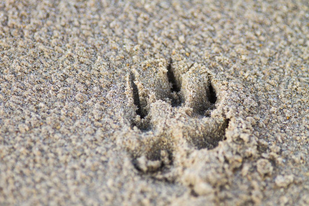 Eine Hundepfote am Strand in der Normandie.