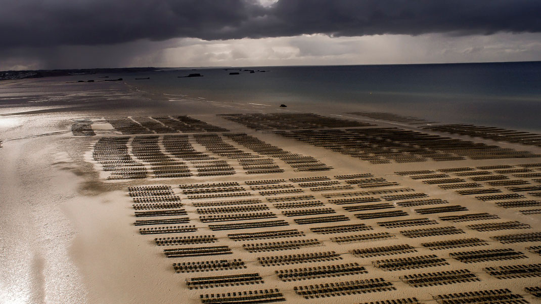 Luftaufnahme von Austernbänken.