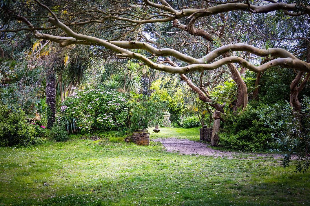 Bäume, Sträucher, eine Grünfläche im Botanischen Garten in Vauville in der Manche Normandie.