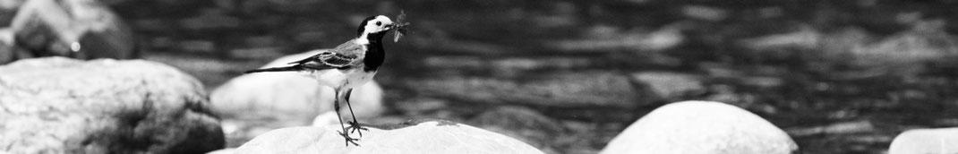 Wiesenwelt, Wiesenwelt.com, Wiesmühl a.d. Alz, Engelsberg, Benno Wieser, Benno Wieser GmbH & Co. KG, besonderer Ort, besondere Menschen, Tierwelt, Schederbach, Libellen, Brauerei Wieser, Brauerei Stallbauer, Gutsherrenturm, Alz, Alztal