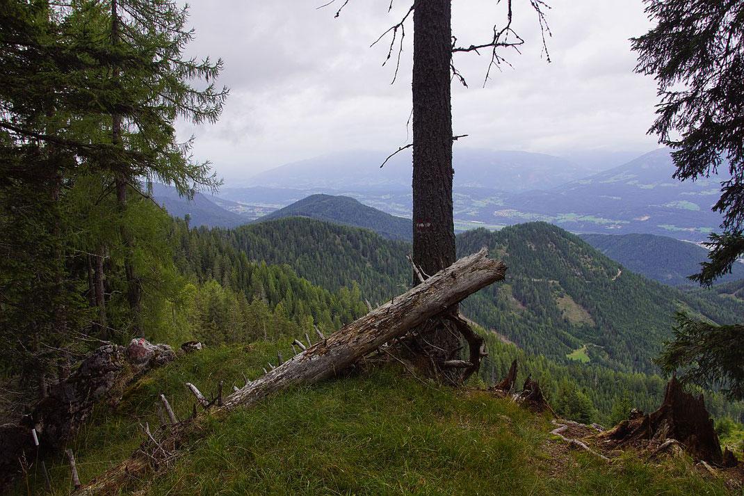 Am Höhenweg vom Sattlernock zur Abzweigung Zeber, der Blick geht nach Norden ins Drautal