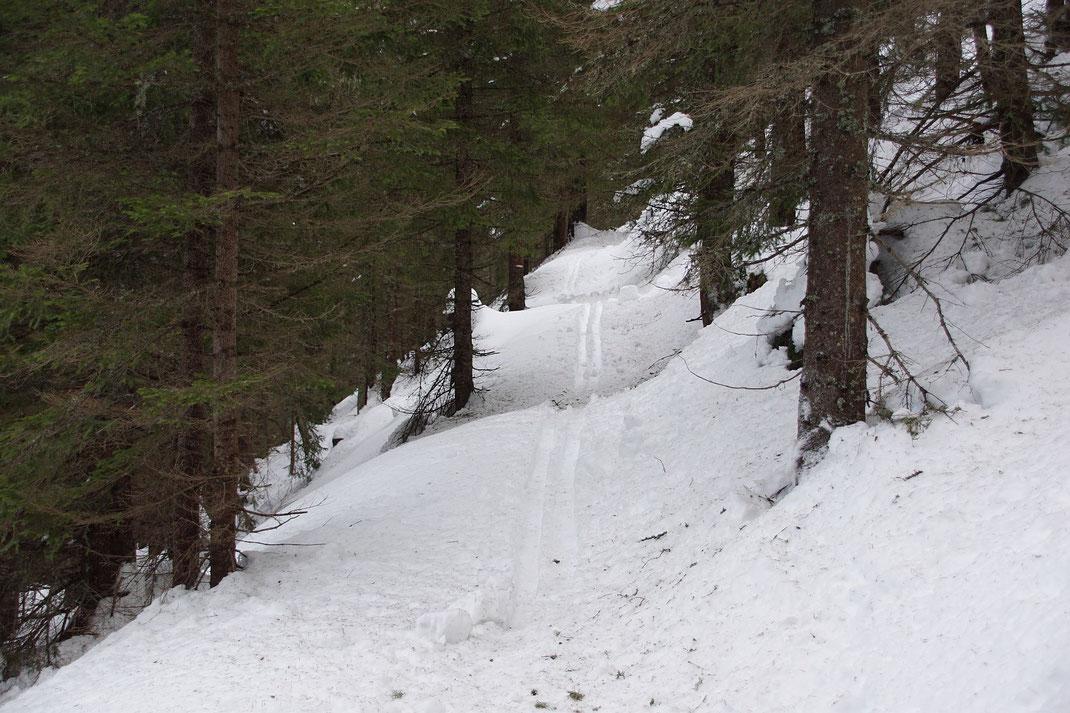 Forst- und Wanderweg sind meist relativ flach