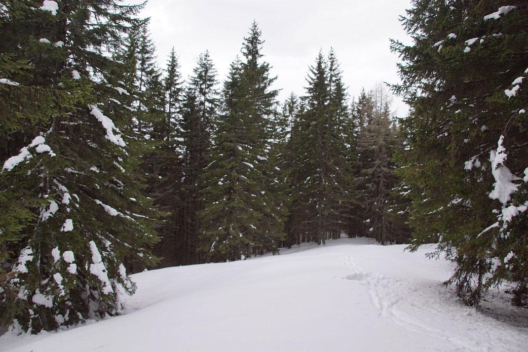 Ja, auch so kann ein Gipfel aussehen. Eine Lichtung im Wald und fertig,der Rawikautz
