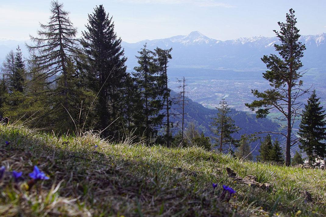 Mittasgkogel und Villach, im Vordergrund die erste Frühlingsboten auf der Alm