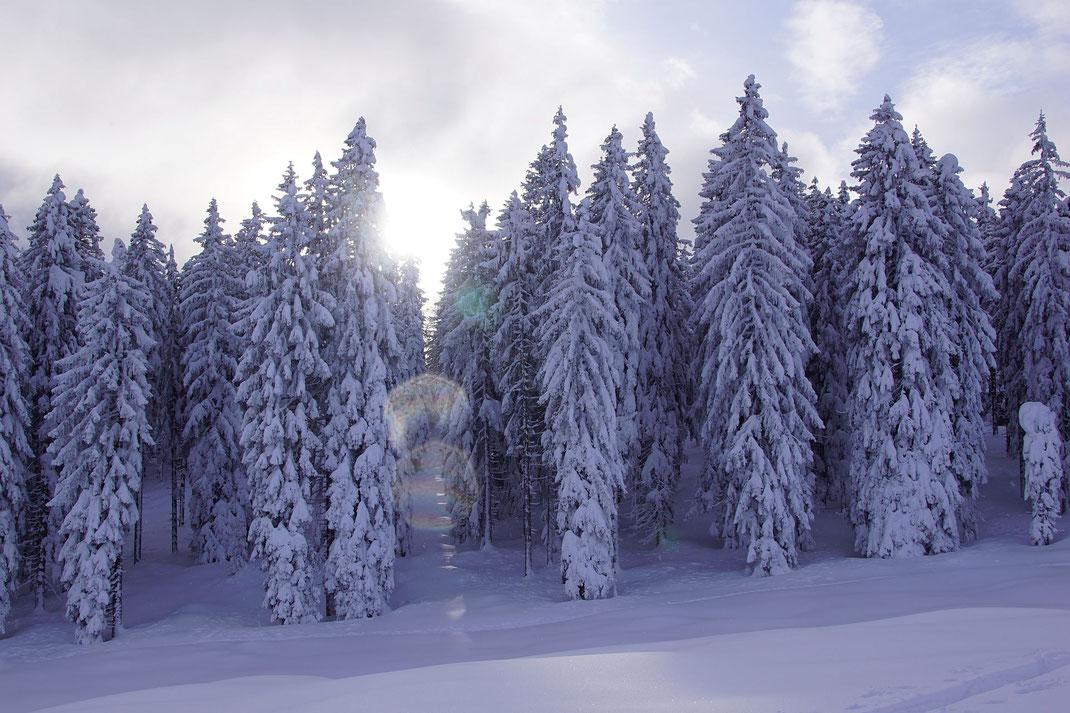 Traumhafter Winterwald oberhalb der Kaserin
